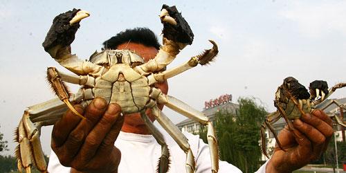 小小蟹农摇身变成拥有几十家蟹专卖店