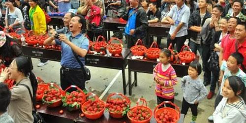 三天让滞销大棚草莓狂销至脱销的活动方案