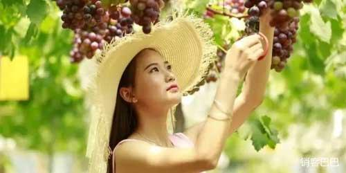 农业共享经济案例,葡萄免费吃三年,他们后端是怎么赚钱的?